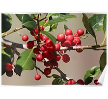 Holly Jolly Berries Poster
