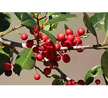 Holly Jolly Berries Photographic Print