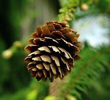 Cone by TriciaDanby