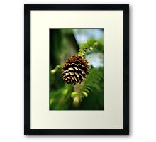 Cone Framed Print