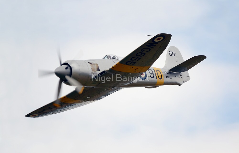 Hawker Sea Fury T Mk 20 by Nigel Bangert