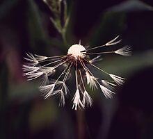 Vintage Dandelion by rafstardesigns