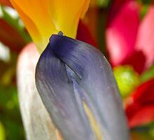 Bird of Paradise flower by Michelle Ricketts