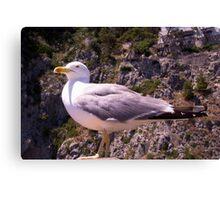 Profile of a Seagull Canvas Print