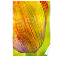 Agapanthus flowerhead Poster