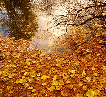 Falling Leaf Reflections .. L17 by Mike  Waldron