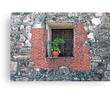 Plant on a Windowsill Canvas Print