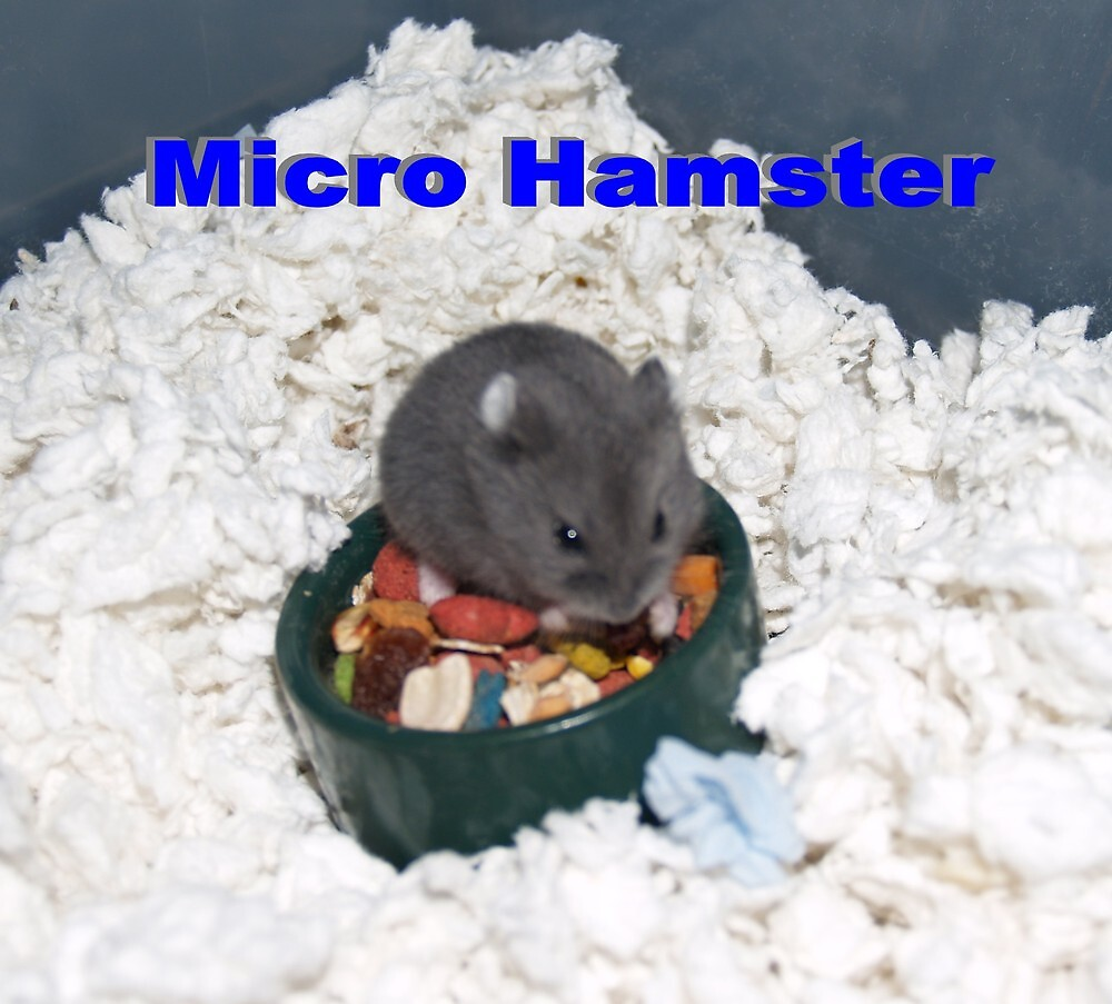 Russian Hamster Tinier Than the Food Bowl by tulsa7035