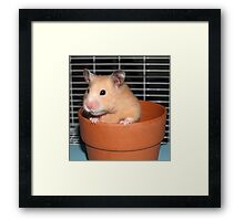 Potted Hamster Framed Print