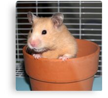 Potted Hamster Metal Print
