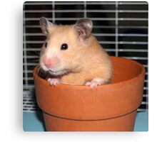 Potted Hamster Canvas Print