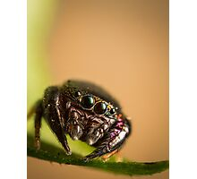 (Simaethula ZZ559) Jumping spider Photographic Print
