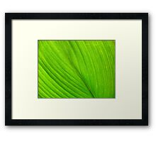©Green Series I Framed Print
