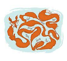 Fox Tail Maze Photographic Print