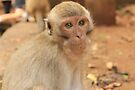 Wild Macaque Monkey - Buddist Temple - Thailand by Honor Kyne