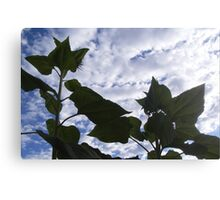 sunflowers against the sky Canvas Print