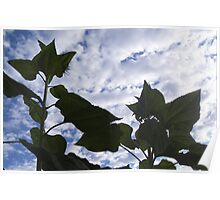 sunflowers against the sky Poster