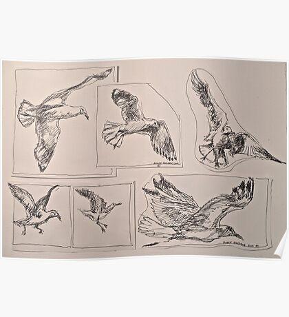 Seagulls, preliminary pen sketches 2012Ⓒ framed 50x38cm FOR SALE at lizmooregolding@gmail.com Poster