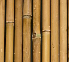 Bamboo Background by Diana Beato
