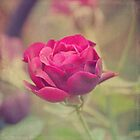 My Rose by Maria Medeiros