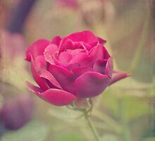 My Rose by ©Maria Medeiros