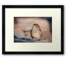 New Beginnings.. Framed Print