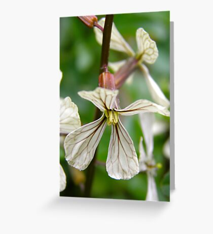 Rocket flower Greeting Card