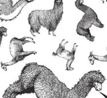 Camelids - Abrace la Diversidad Sticker