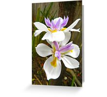 Diete Iris Greeting Card