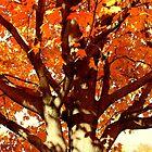Blazing Branches by SolasandScath