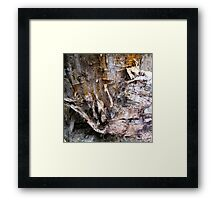Birch Bark #1 Framed Print