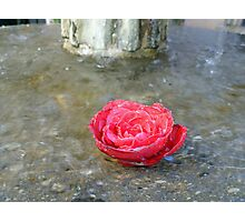 Rose in Fountain  Photographic Print