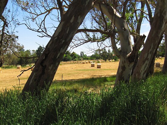 Harvest Time in golden paddocks, Adelaide Hills S.A. by Rita Blom