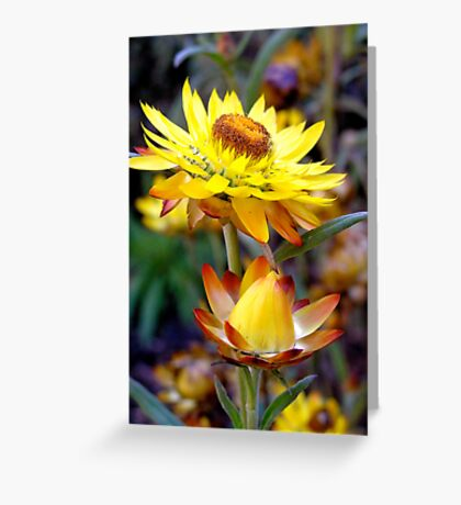 Yellow Paper Daisy Greeting Card