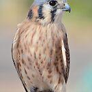 Pretty Bird by Barbara Manis