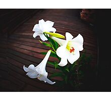 White Lilly Family Photographic Print