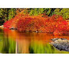 Vine Maples Photographic Print