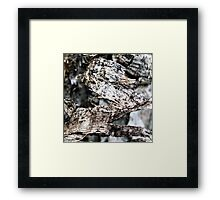 Birch Bark #3 Framed Print