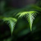 Fern in Dappled Sunlight by Jim Worrall