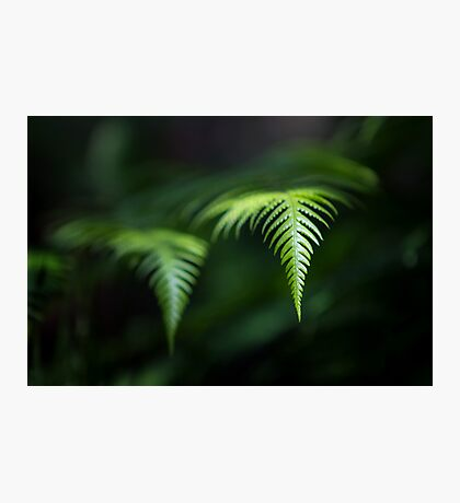 Fern in Dappled Sunlight Photographic Print