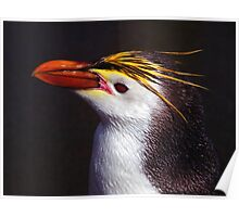Royal Penguin Portrait Poster