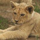 Lion Cub by AngelaHumphries