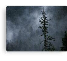 Fog in the Dark Woods Canvas Print