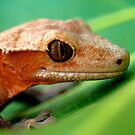 Gecko by Julie Moore