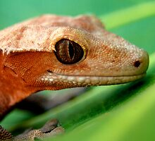 Gecko by Julie Moore