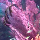 OCTOPUS' GARDEN - Underwater photography by Michael Brewer by Michael Brewer