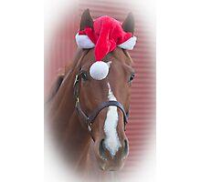 Holiday Horse Ken Photographic Print
