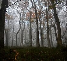 Autumn Mist by Country  Pursuits
