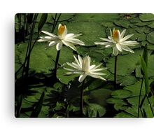 Pond Treasures ~ Part Twelve Canvas Print