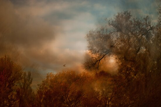 Autumn Flight by Mark Wade